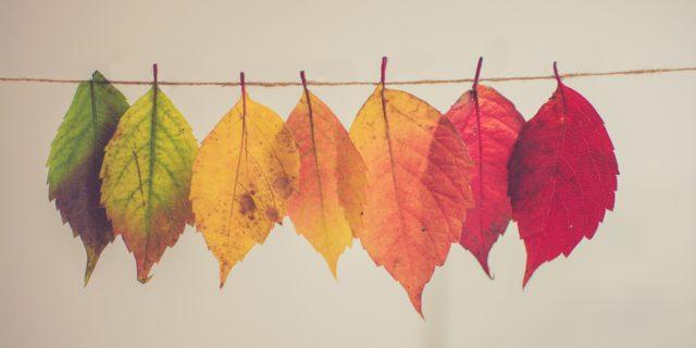 Womens Hoodie,Autumn Season Shedding Faded Branches Fall Foliage Melancholy Zen Print,Lady Sweatshirt